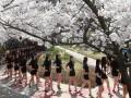 春天福利 模特专业女学生樱花树下齐秀大长腿 (4)