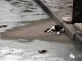 重庆一小区地面发烫达50度 具体原因仍未查明